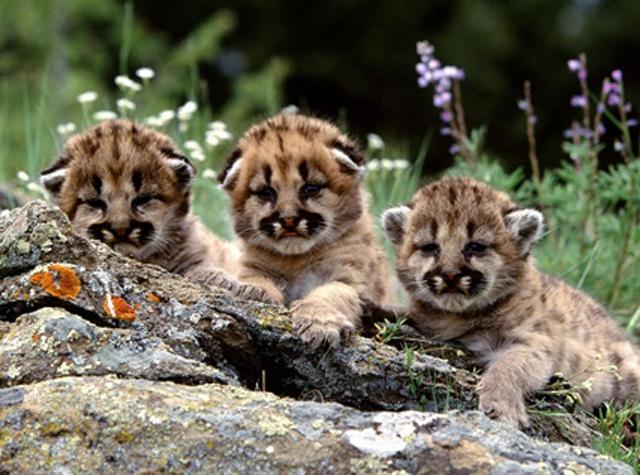寻找最萌小动物,总有一只戳中你的萌点