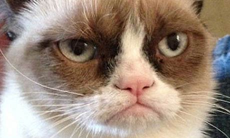 internet grumpy cat是一只红遍网络的猫,由于总是一副生气的表情,被
