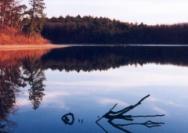 梭罗在瓦尔登湖畔领悟了什么?