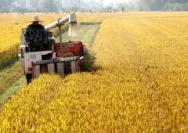 时隔23年,中国再次发表粮食白皮书