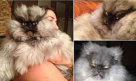 全球最愤怒的猫