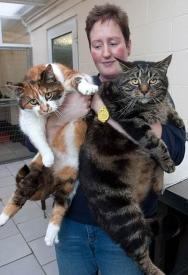英国肥猫靠脂肪存活