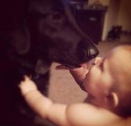 忠犬揭发虐婴保姆