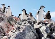 南極大陸出現創紀錄高溫