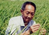 """致敬""""杂交水稻之父""""袁隆平"""