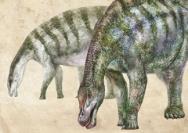 中国又发现新恐龙!