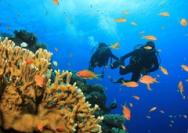水肺潜水:一场打开新世界大门之旅