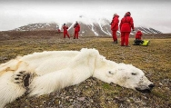 北极熊饿死