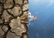 气候变化削减海洋物种多样性